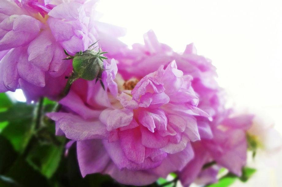kwiaty-na-prezent